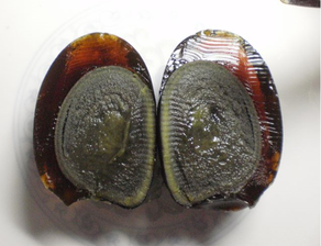 preserved egg inside