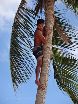 Los Cabanas beach - man climbing a coconut tree