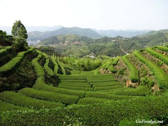 Suichang, tea hills